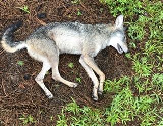 Foxes -2-33e4598a-380f-497d-8fad-cf5478d80eb9.jpeg