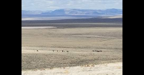 Rugers in the desert-d2.jpg
